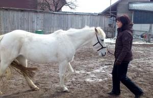 pferdeflüstern01